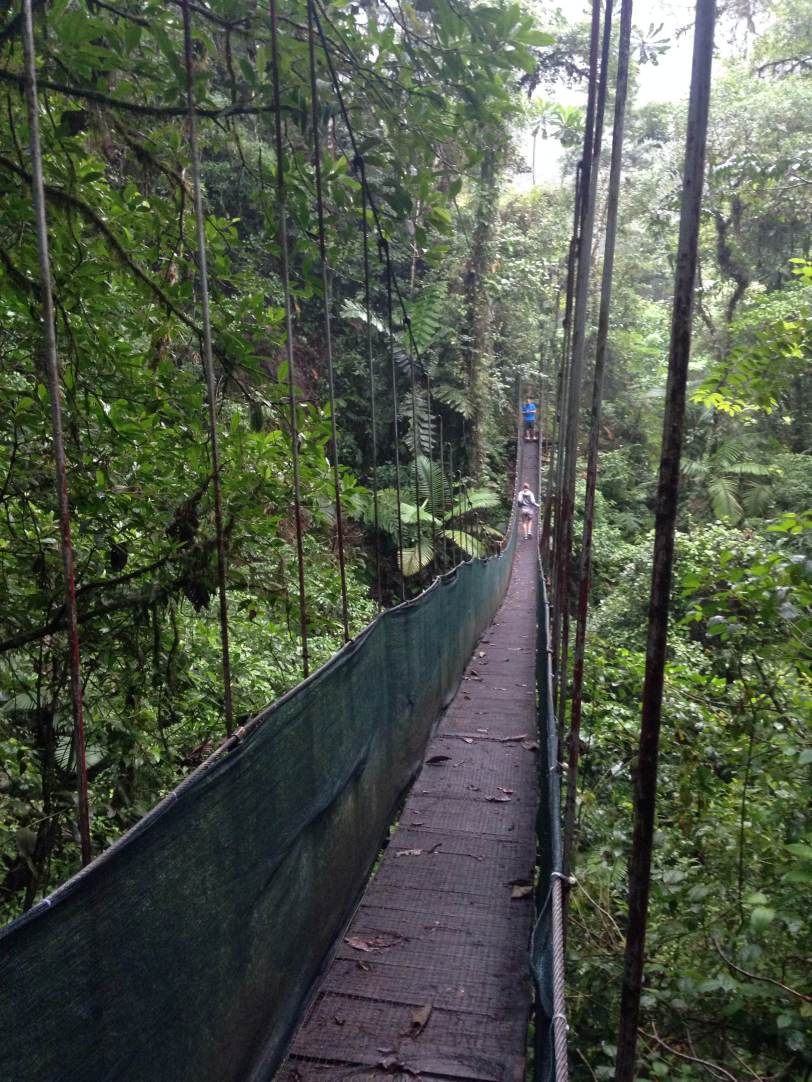 hanging bridge!